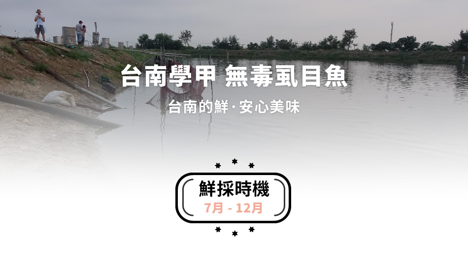 台南學甲無毒虱目魚
