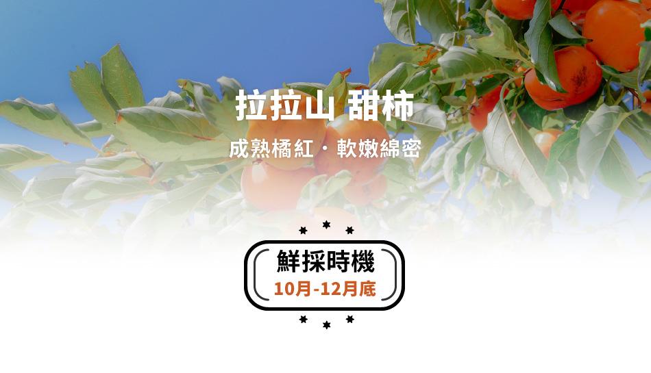 拉拉山甜柿